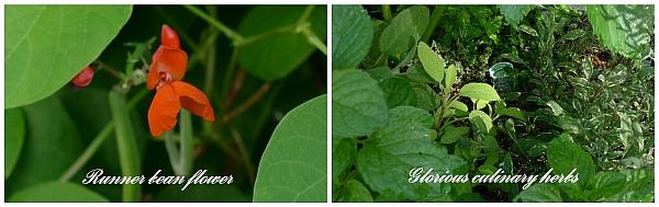 Planters_4_titled_web
